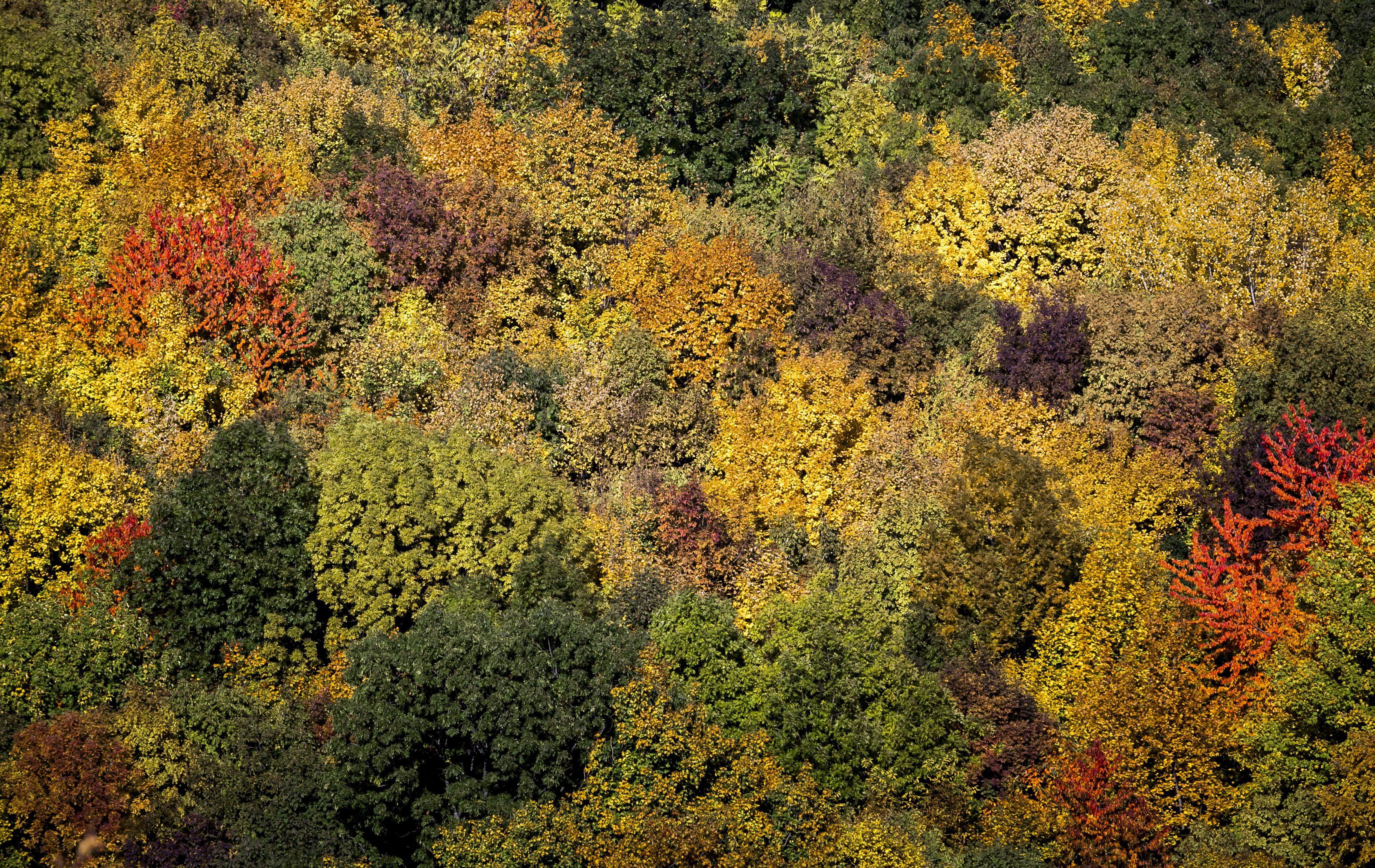 Listázzák a Budapest körüli fákat