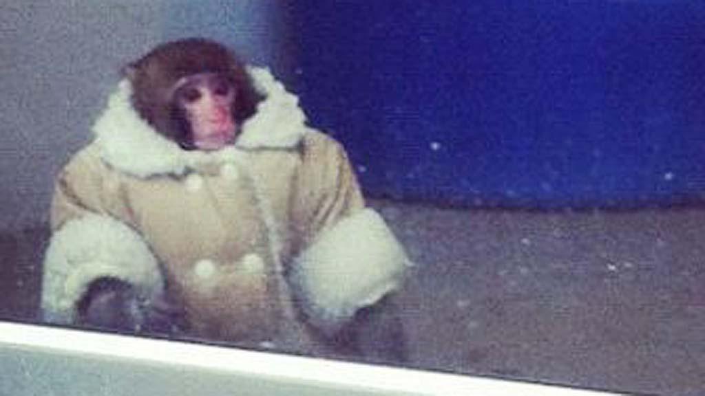Autista majmot hoztak létre kínai tudósok