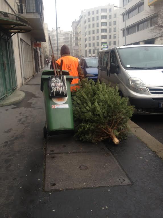 Brüsszel többé nem támogatja a kivágott karácsonyfákat
