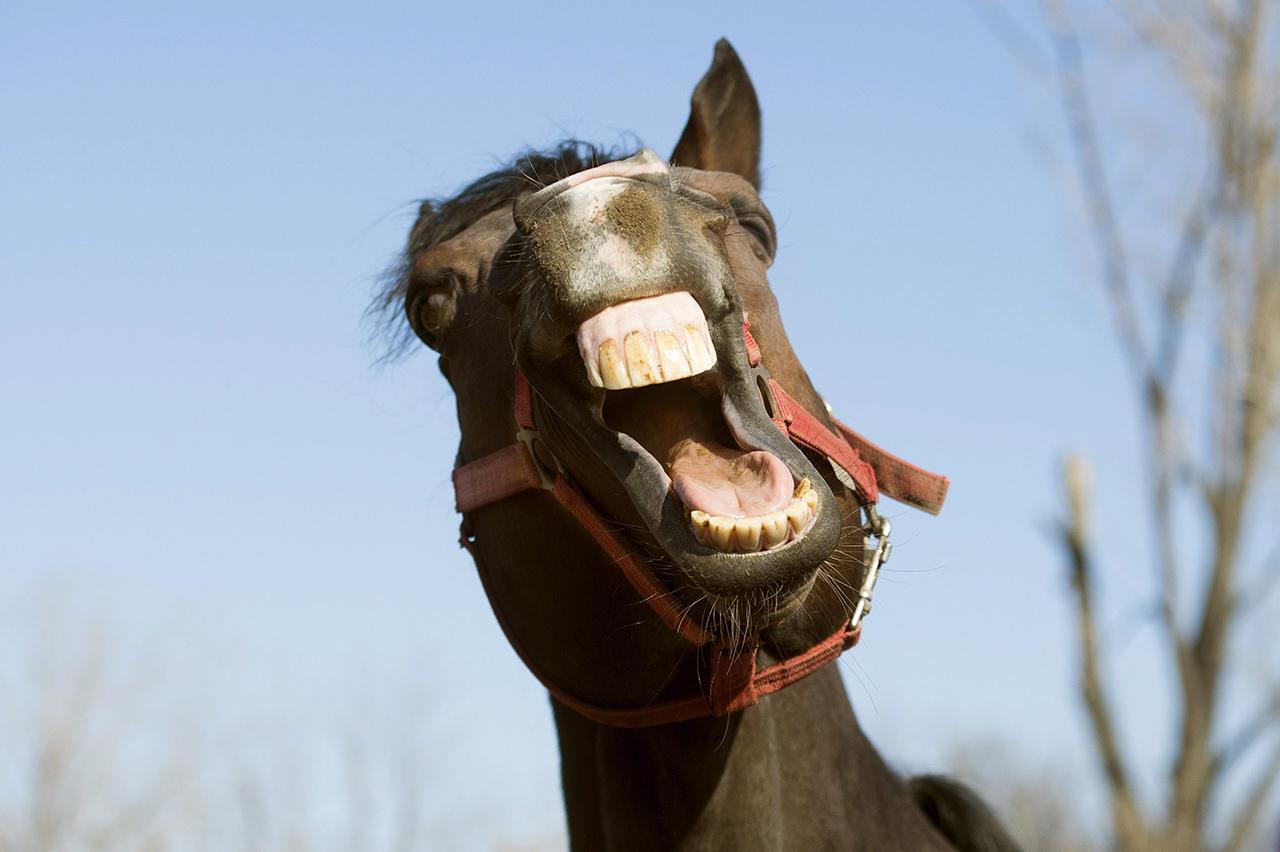 A brit és ír lóversenyek történetében először nyert olyan ló, aminek a győzelmi esélye 1 a 300-hoz volt