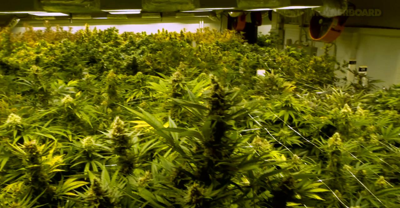 Szívás: az EU friss drogjelentése szerint tavaly 22,1 millió európai füvezhetett