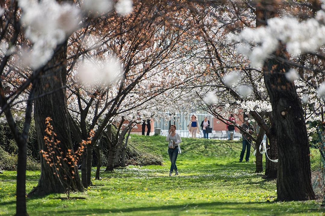 Április utolsó napjaiban napsütésre és záporokra is kell számítani