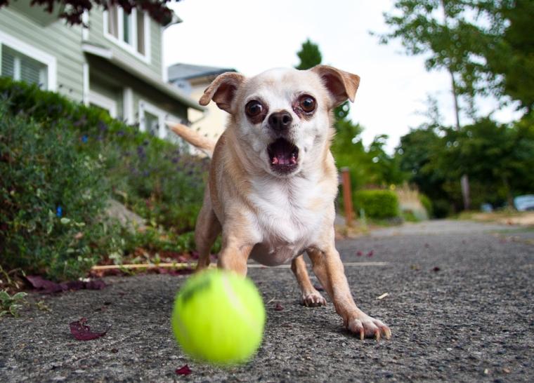 7 millió dollárt akar az amerikai kislány, akinek az állatvédők elrabolták, majd megölték a kutyáját