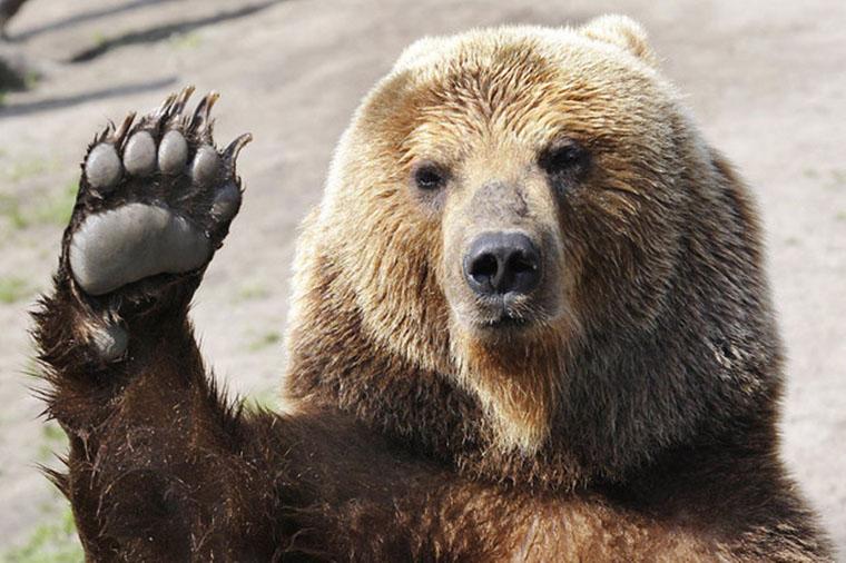 Mégsem fogták el a medvét