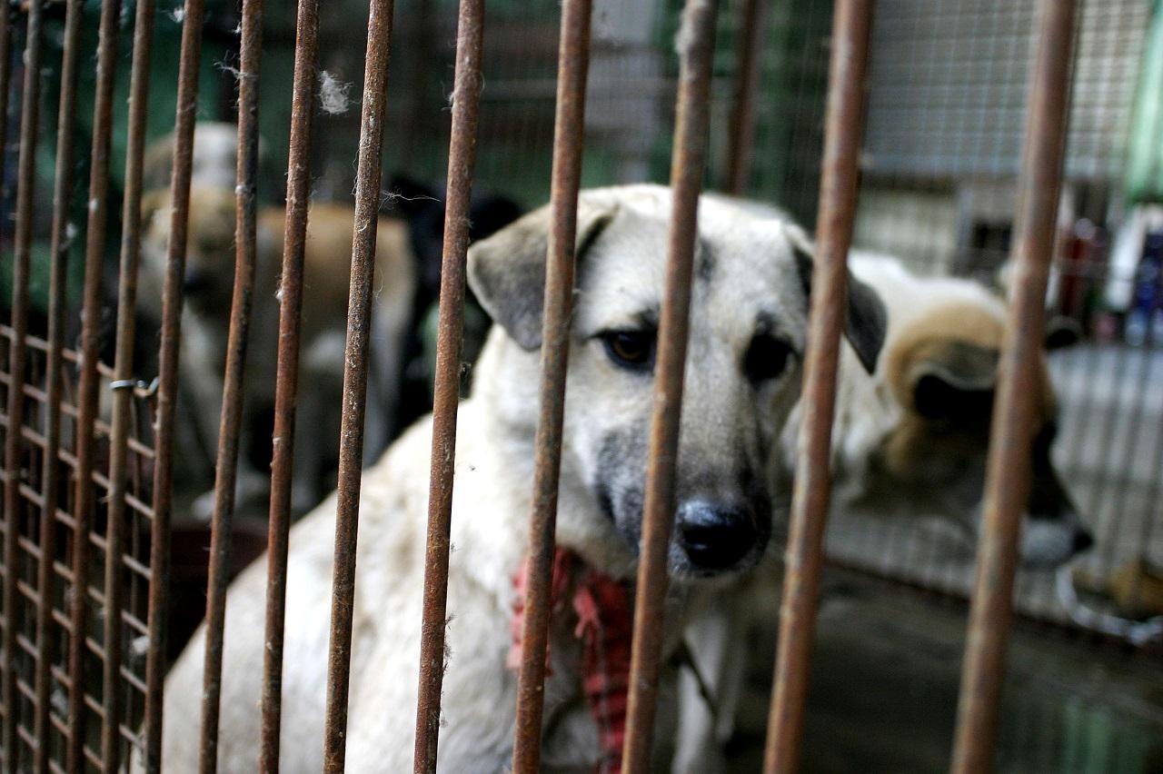 Sencsen lehet az első kínai város, ahol betiltják a kutya- és macskahús fogyasztását