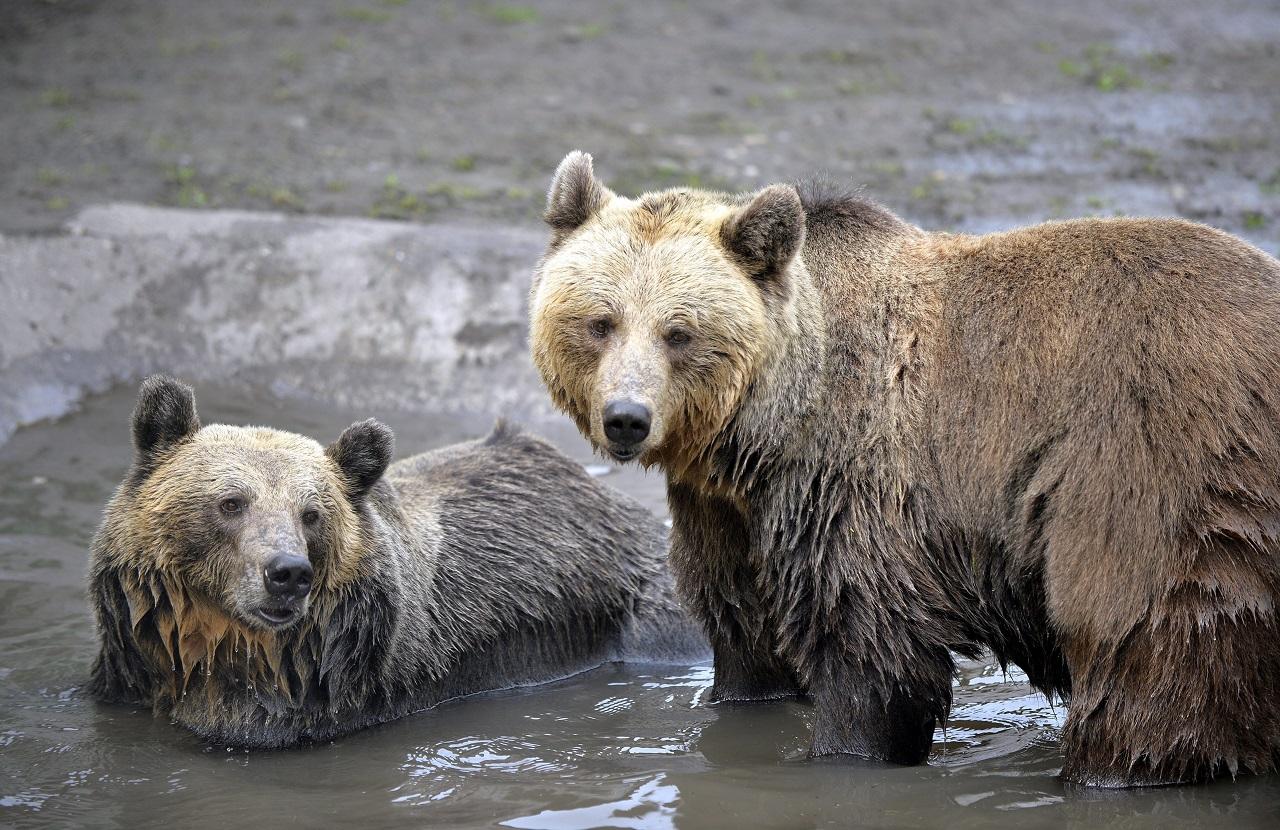 Cukorsokkot kaptak az állatok a Veresegyházi medveotthonban