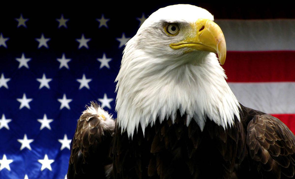 Új veszély leselkedik az amerikai madarakra: a kormány