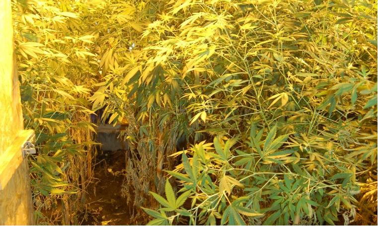 Lopott árammal termelt marihuánát egy villanyszerelő