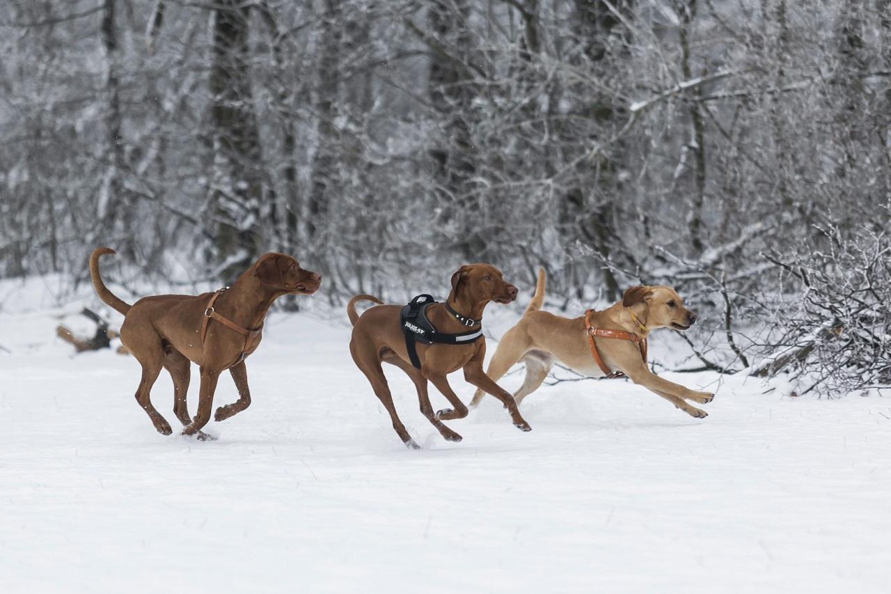 Szombat délutánra havazást jósolnak