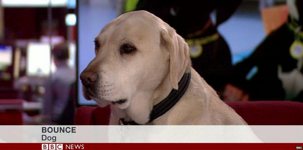 A minisztérium visszavonja a törvényjavaslatot, ami szerint a kutyaadó a vadász Semjénnek hála vadászkutyákra nem vonatkozna