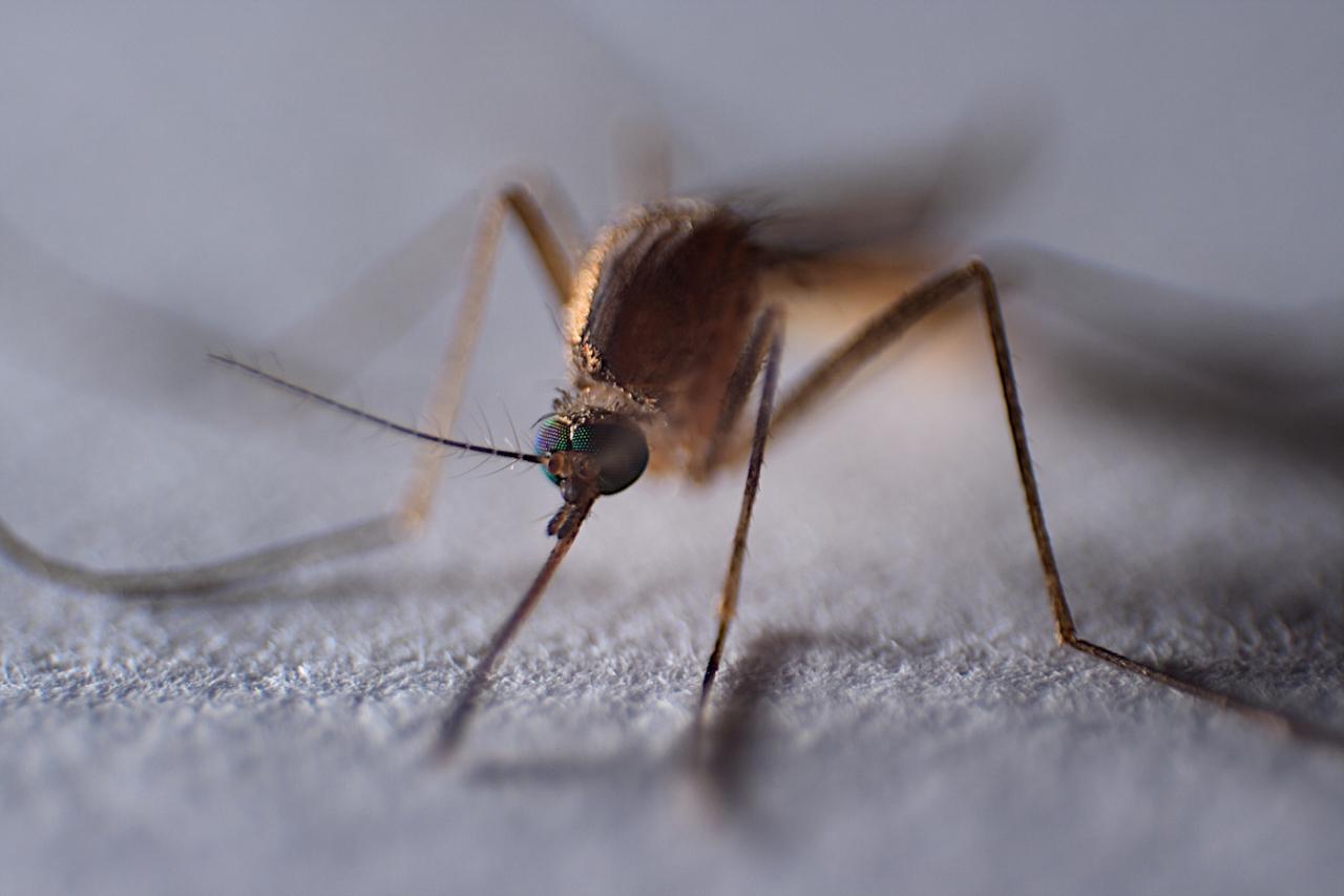 A koronavírus sem terelheti el a figyelmet a balatoni szúnyogirtásról