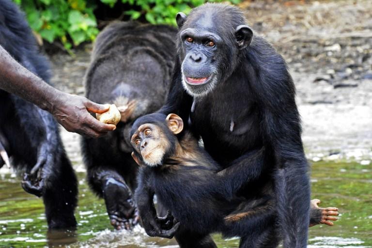 Majmok loptak titkos katonai dokumentumokat