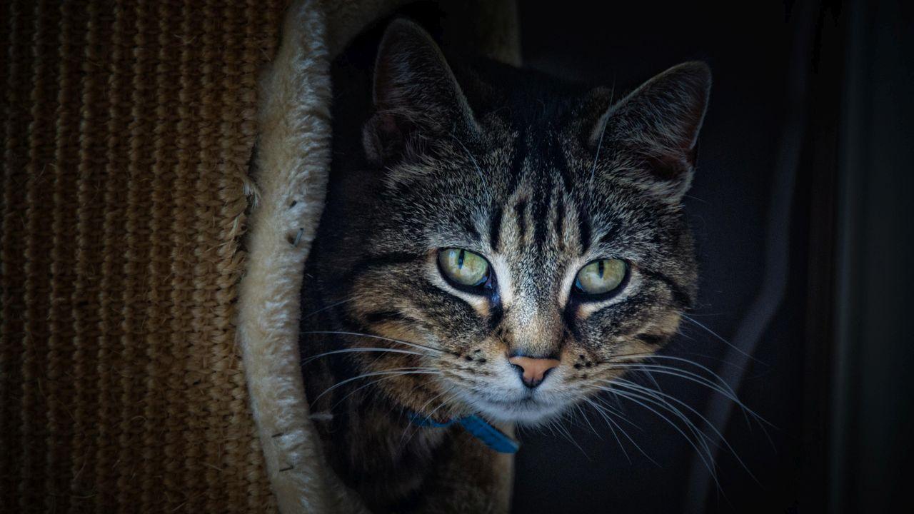Évi több mint 2 milliárd hüllőt, madarat és kistestű emlőst ölnek meg a házi macskák Ausztráliában
