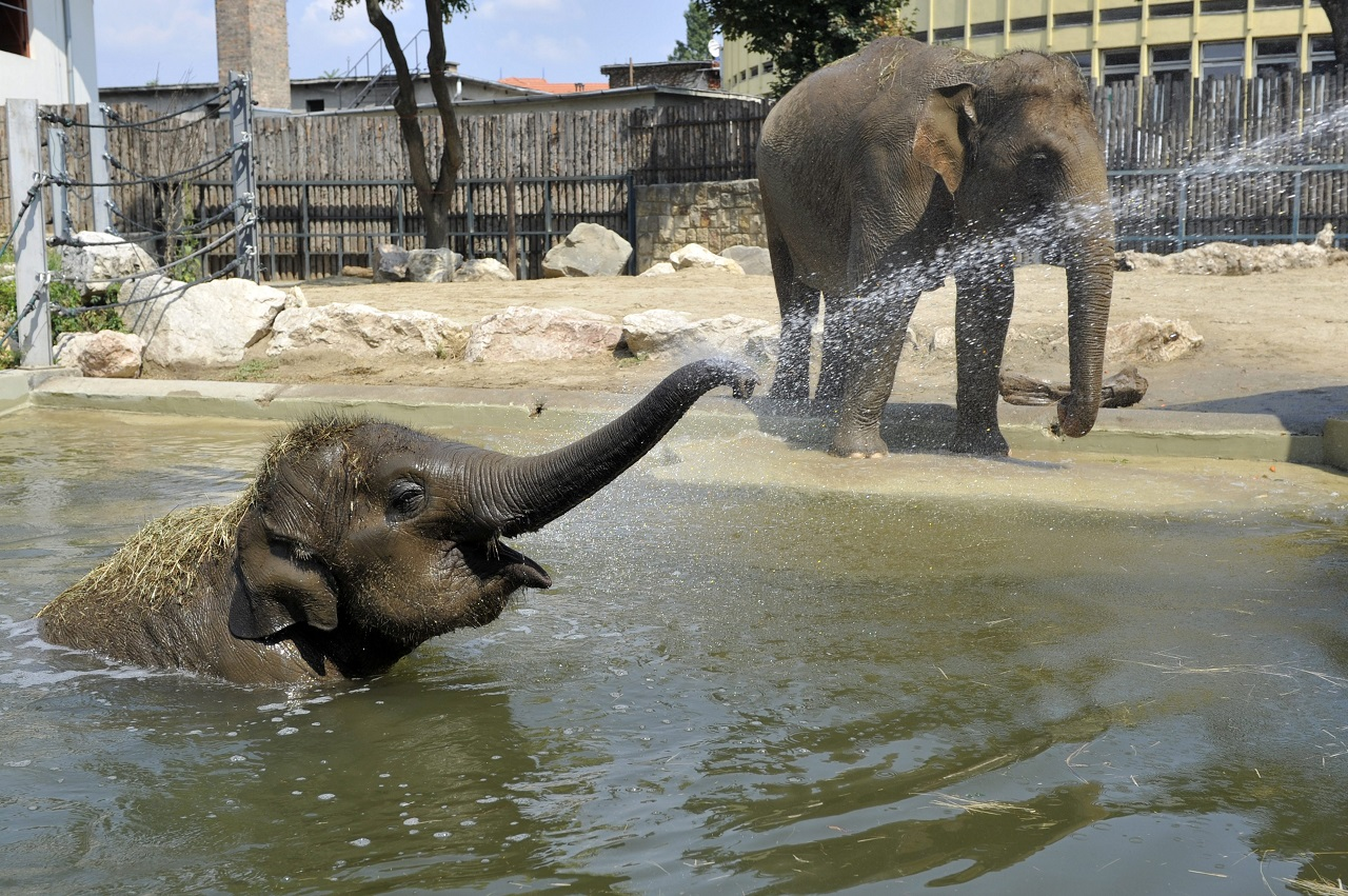Hétvégén nyit a Fővárosi Állatkert, hat budapesti gyógyfürdő és több mozi