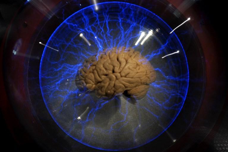 Az emlékek kialakulásában alapvető szerepet játszó idegpályát találtak az MTA agykutatói
