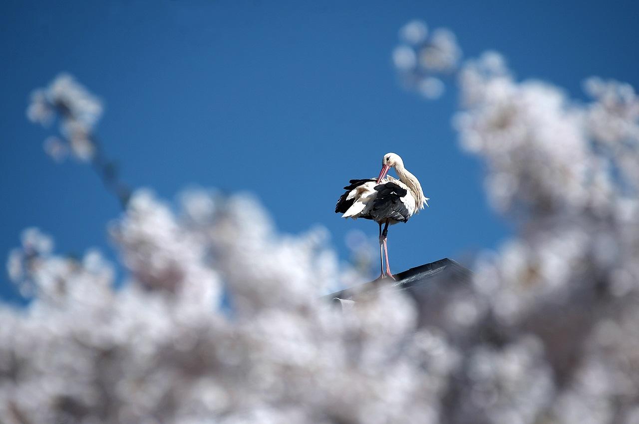 Gigantikus telefonszámlát csinált egy gólya egy lengyel alapítványnak