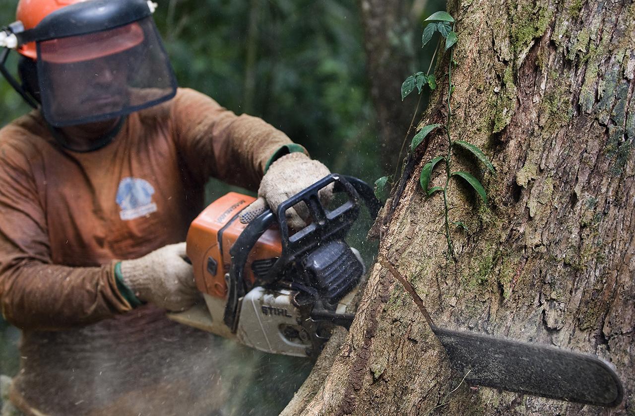 Hihetetlen pazarlás folyt az erdészeti gazdaságoknál