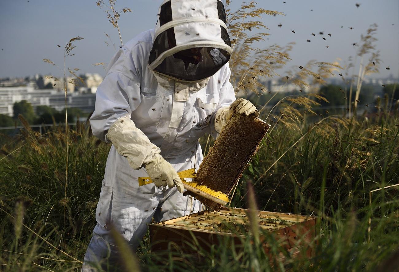 A méz ötöde hamis az EU-ban