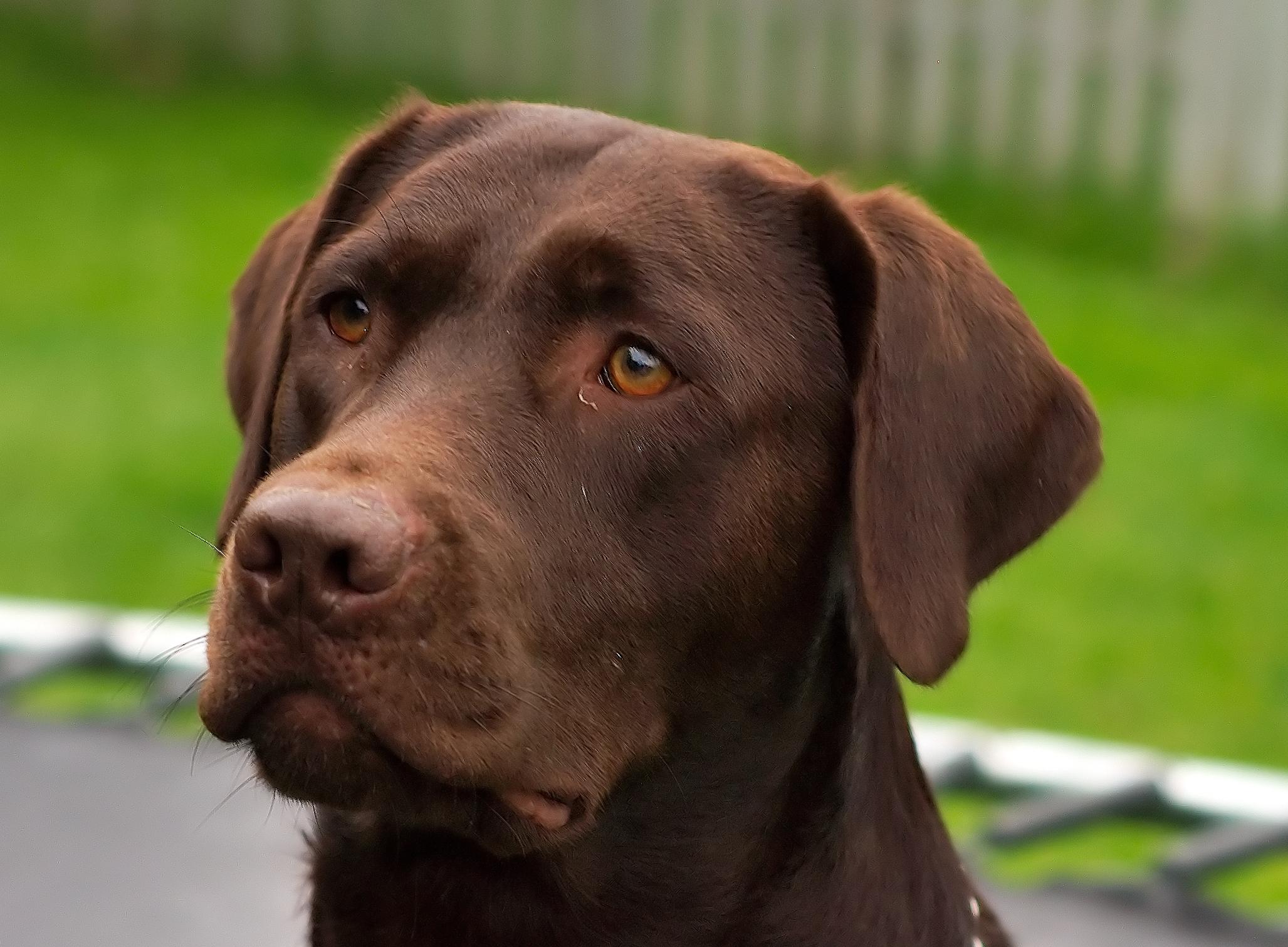 Egy Ravasz nevű kutya lábon lőtte a gazdáját