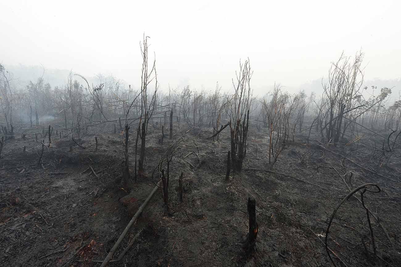 A Miniszterelnökség 2,7 milliárdot különített el erdőgazdálkodásra