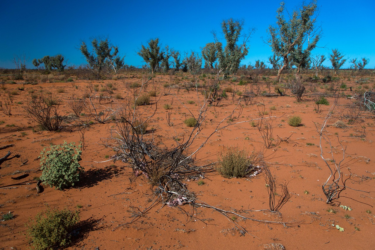 Hat napig hangyákon élt a sivatagban eltévedt férfi