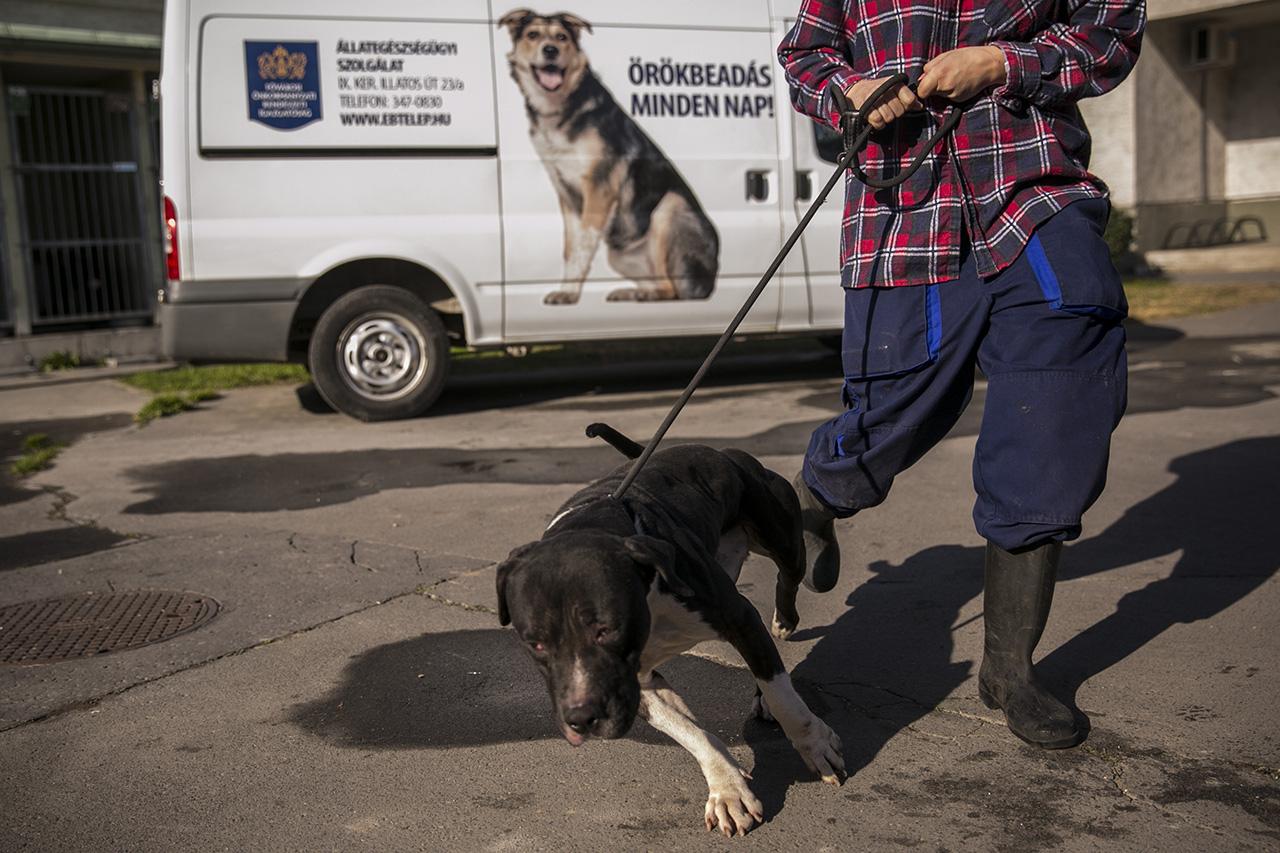 Kétszáz kóbor kutya tartja rettegésben Fegyverneket