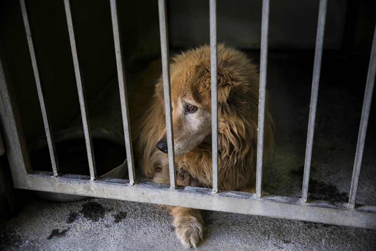 300 000 kóbor kutya él Magyarországon