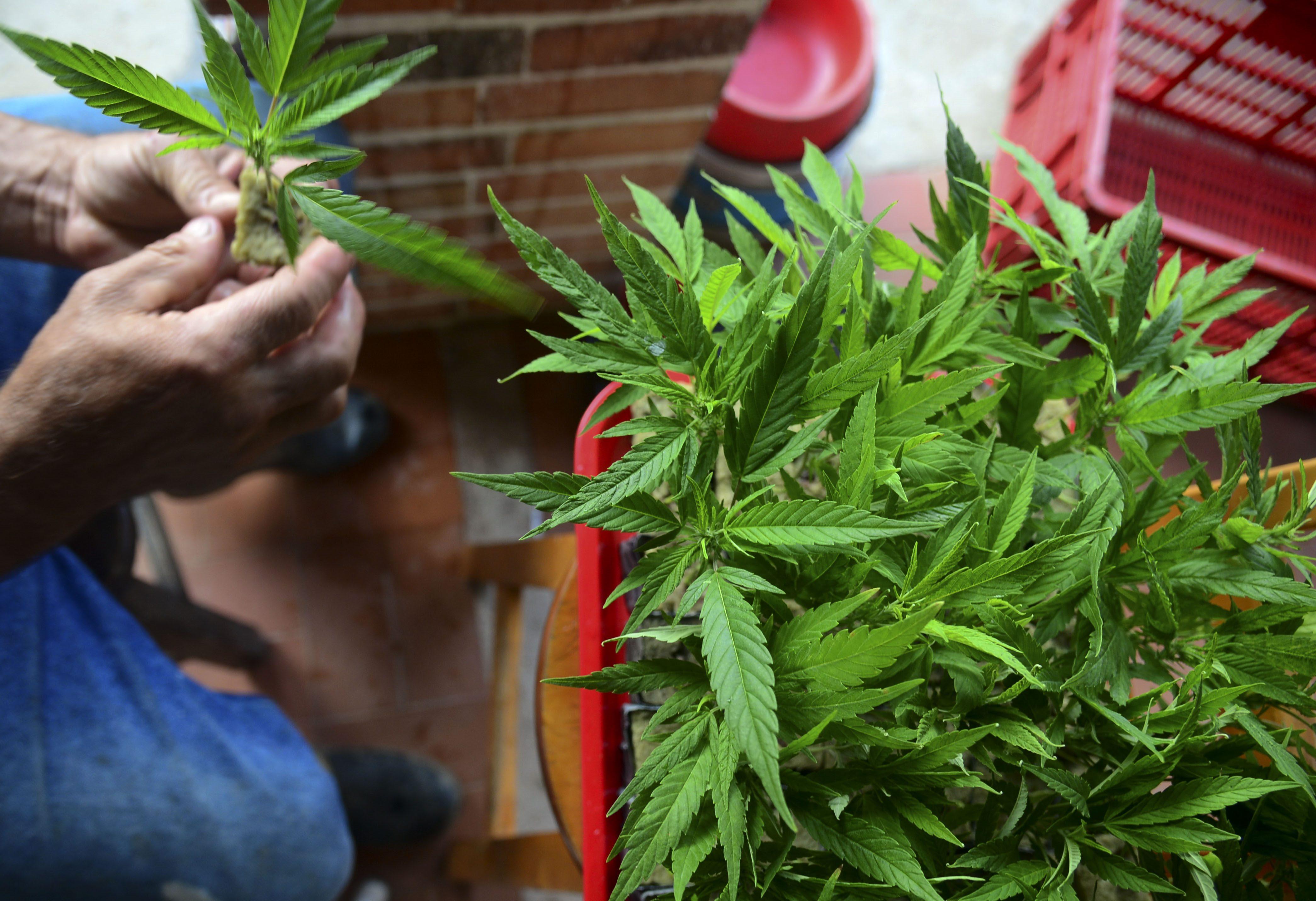 Az ENSZ raportőre szerint a kábítószer-fogyasztás büntetése sérti az egészséges élethez való jogot