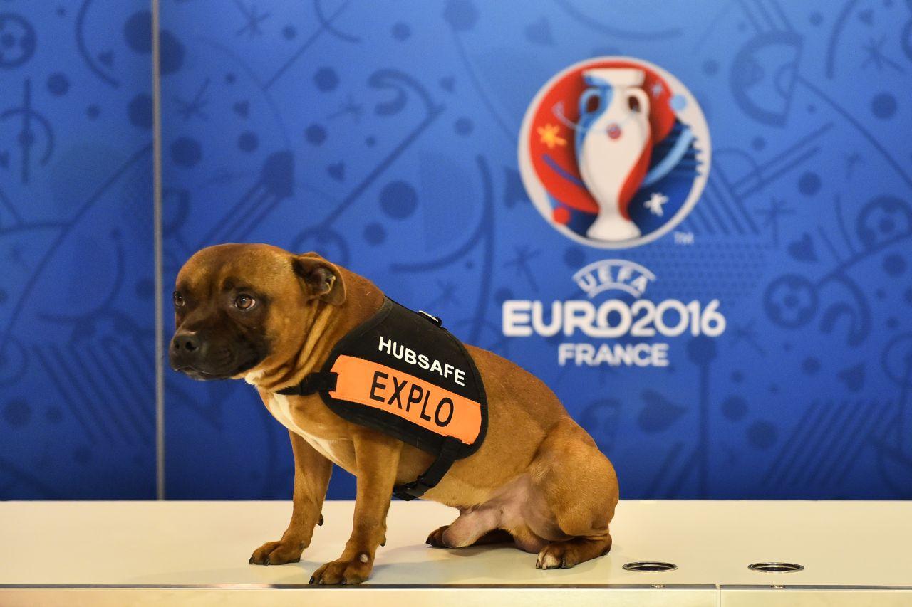 Több ezer éve az európai emberek is háziasították a kutyát, de ezt az európai kutyát később kiszorította az ázsiai kutya