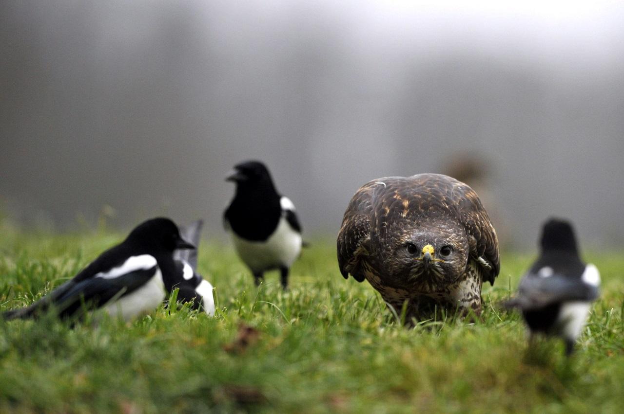 Úgy tűnik, hogy a természetvédelem lesz a bürökráciacsökkentés áldozata