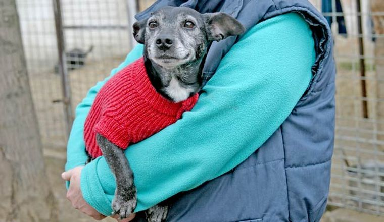 Kis kötött pulóverek melegítik az elárvult, beteg kiskutyákat
