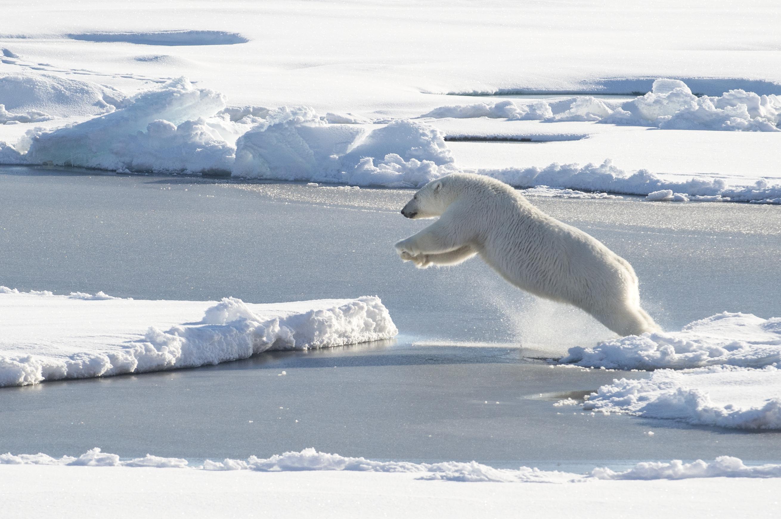 A sarkvidékre mentek filmet forgatni, alig találtak jeget