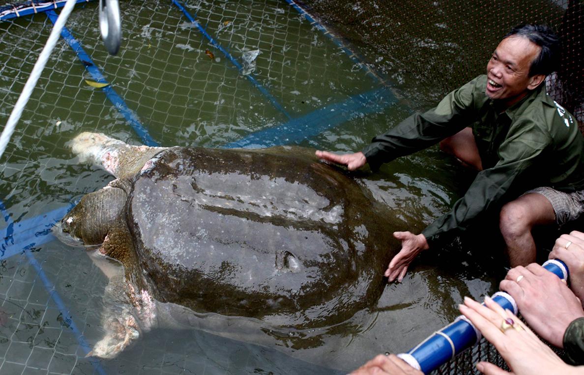 Meghalt Vietnam szent állata, az öreg teknőc