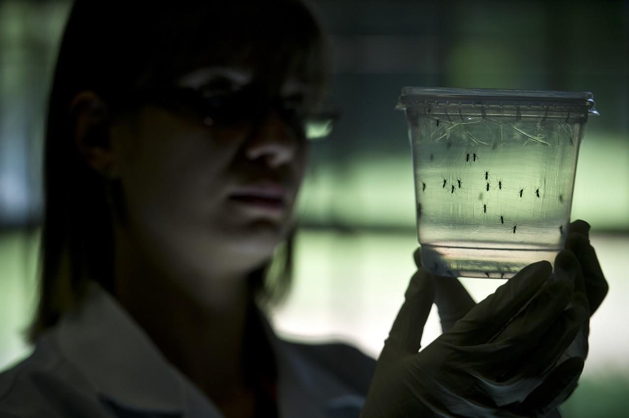 A zikafertőzött anyák 5 százalékának született rendellenességgel a gyermeke