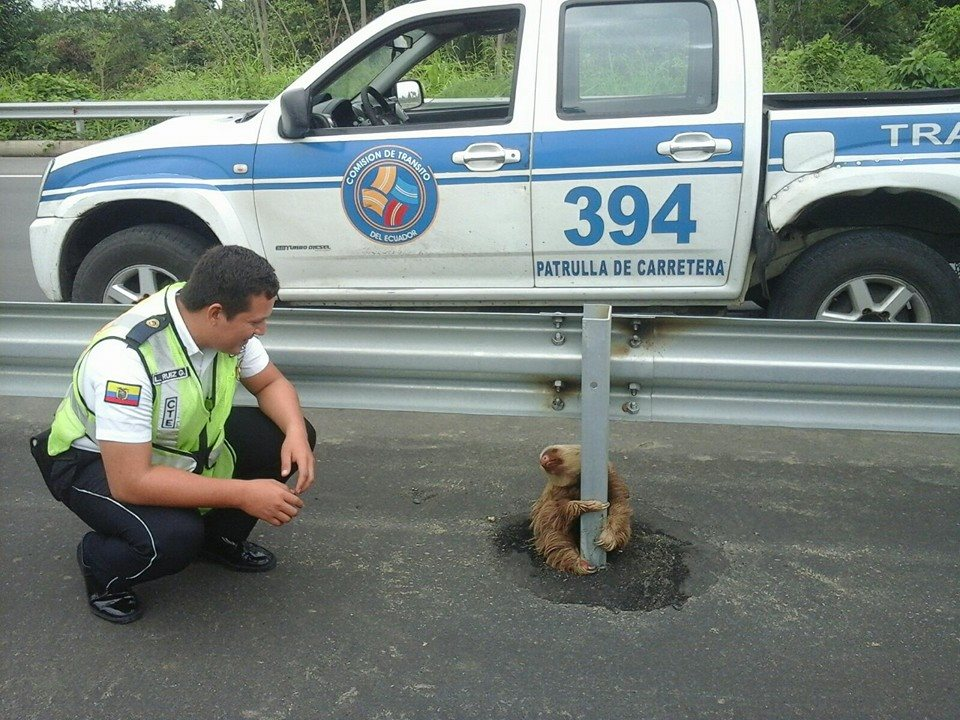 Ez a kedves ecuadori köztisztviselő már megmentett egy lajhárt