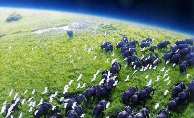 Visszatér minden idők legszebb természetfilm sorozata, a Planet Earth