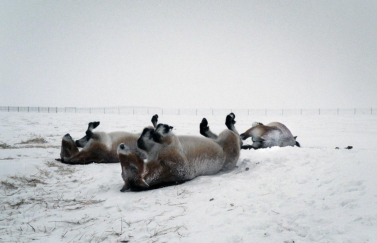 Megérkezett a hó, több kamion máris elakadt Nógrád megyében