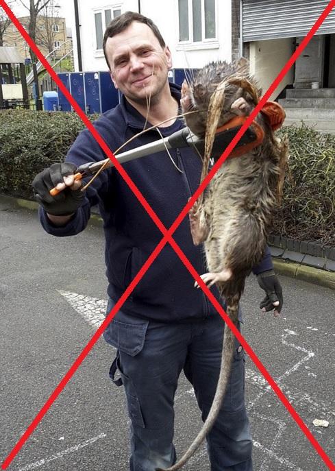 Lebukott az óriáspatkány: pár óra alatt kiderült, hogy kamu volt a kép