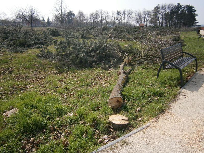 Balatonföldváron is kivágtak fákat