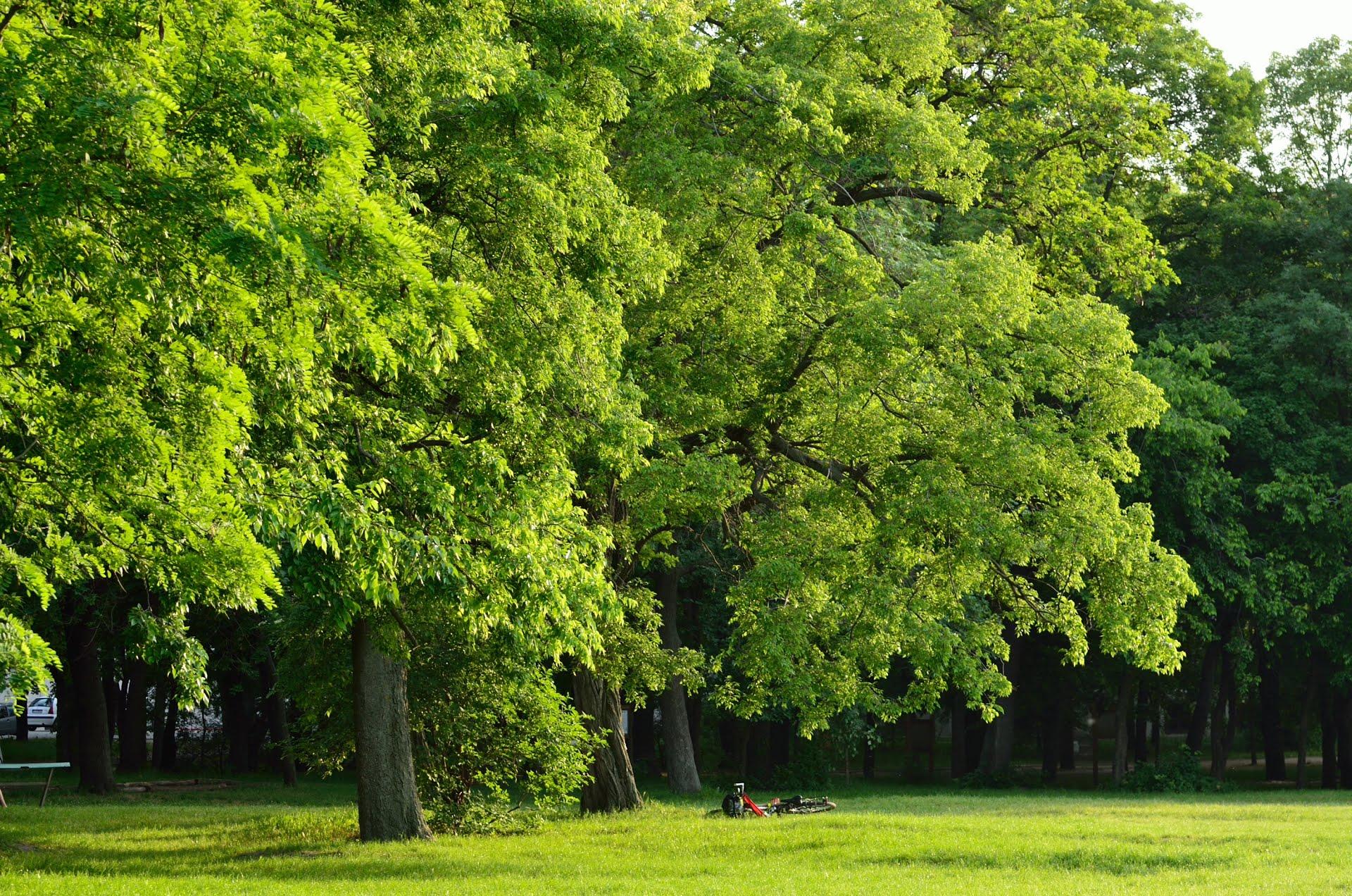 Kisebb erdőt akarnak kivágni az Orczy-kertben