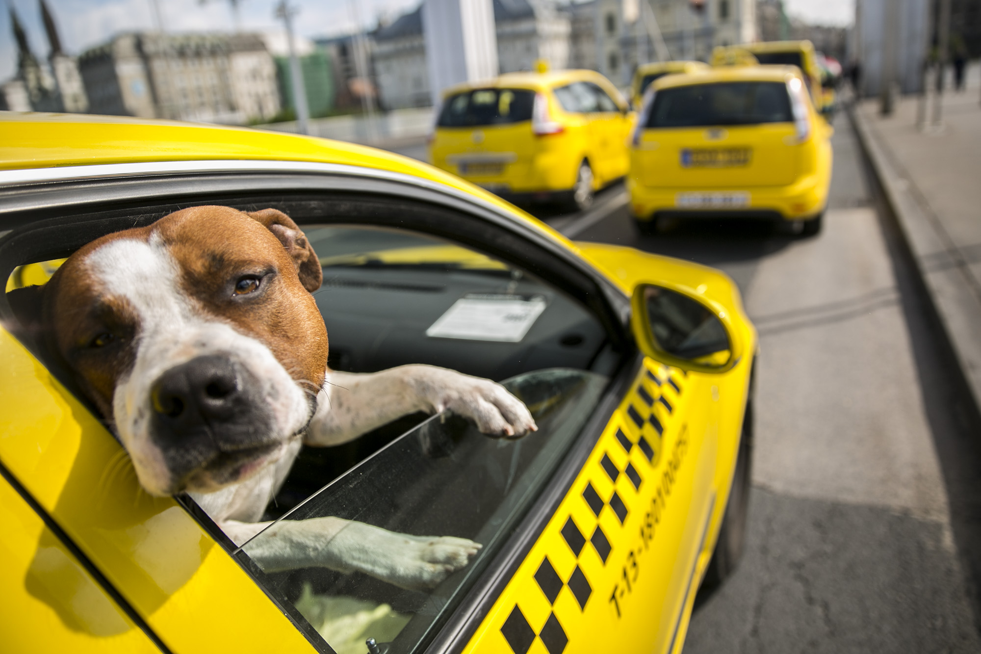 Január 1-től csak arcképes igazolvánnyal fuvarozhatnak a budapesti taxisok