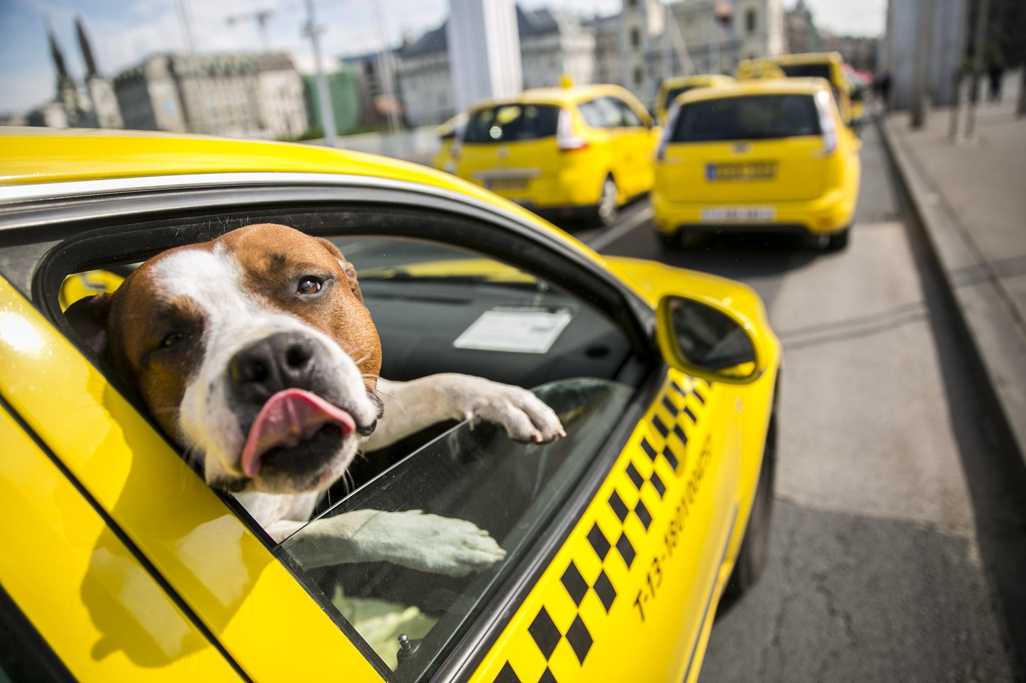 Megőrjíti a dugó? Harcoljon azért, hogy Budapesten is leváltsák a taxikat a megosztott autók!