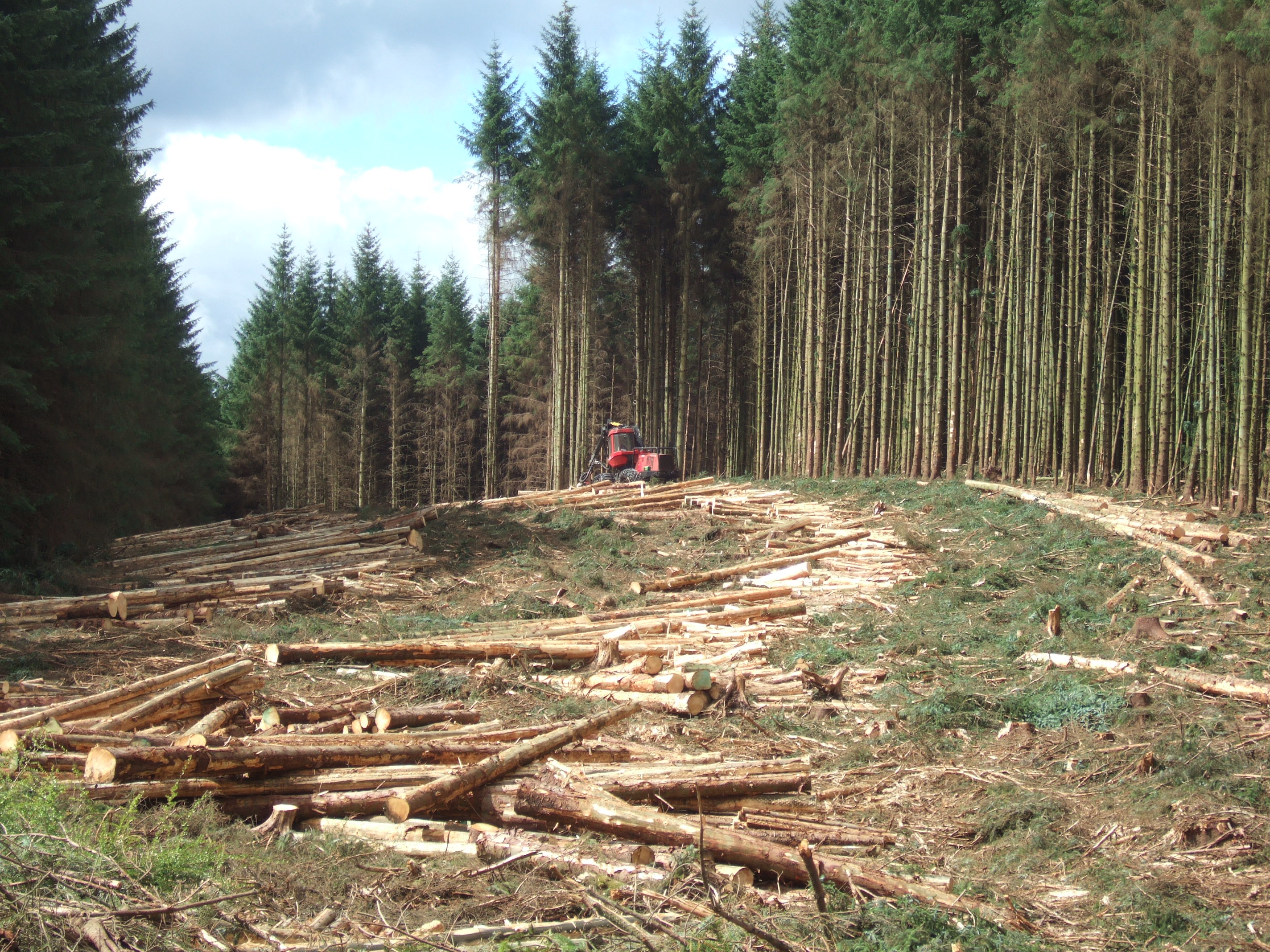 Évekig tartott, mire az állam rájött, hogyan lopják szét az állami erdőtársaságokat