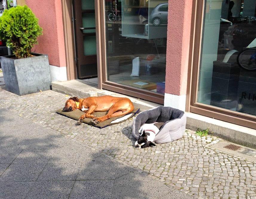 Kutyajogosítvány lesz Berlinben