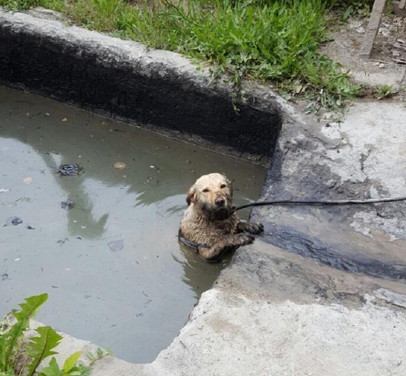 A tűzoltóknak kellett kimenteniük a bajba jutott kutyát a tiszakécskei betongyár tartályából