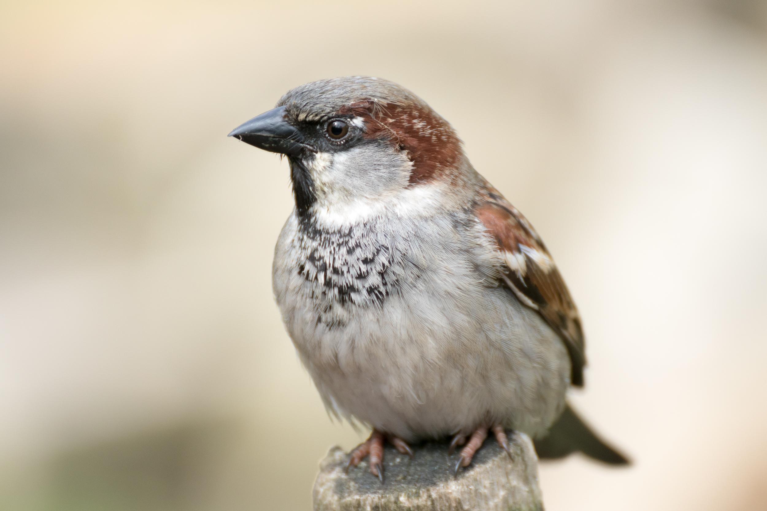 Végre lehet szavazni, hogy melyik faj legyen 2017-ben az év madara Magyarországon