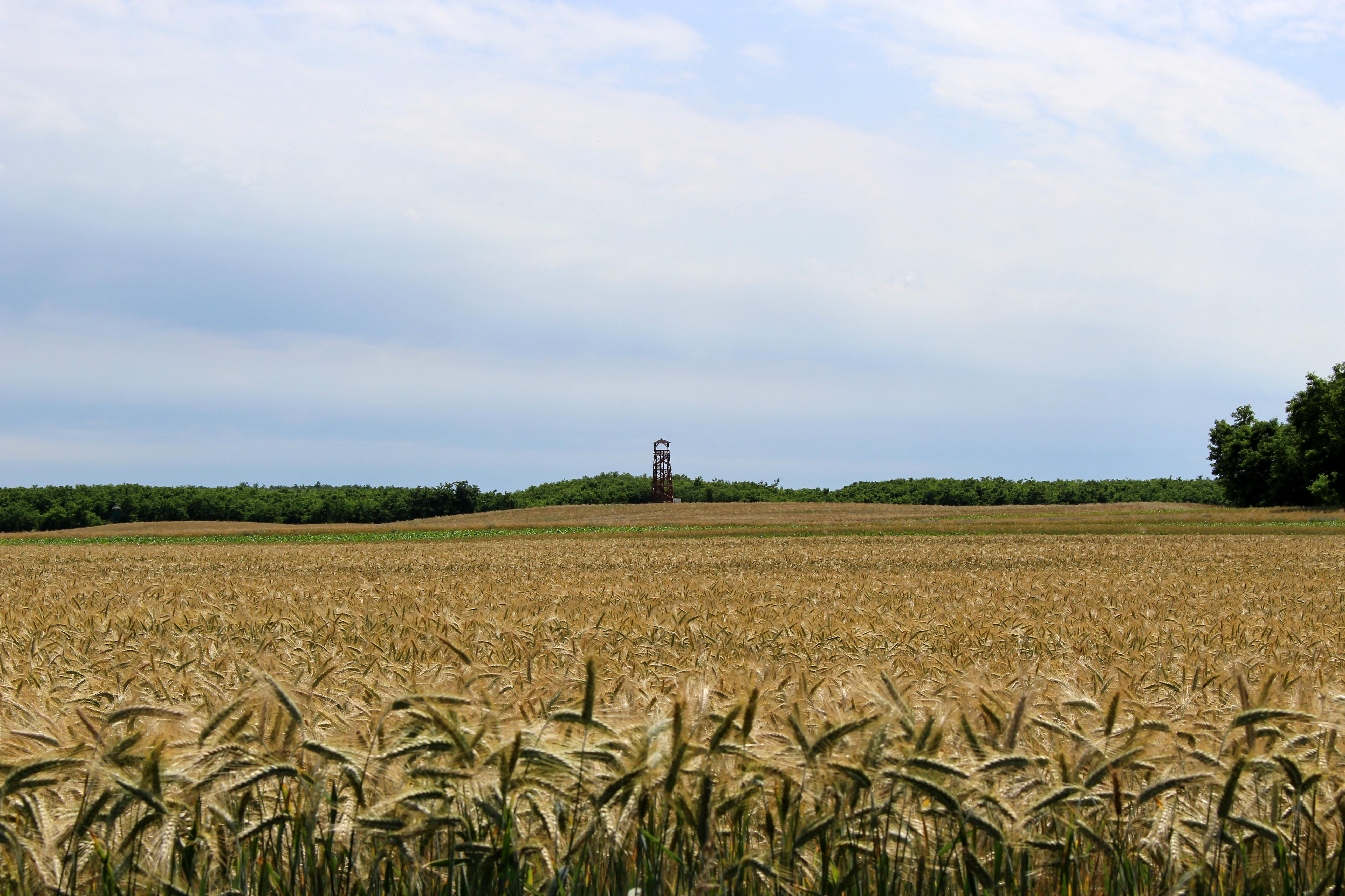 Az agrárkamara dönthetne, hogy ki vásárolhat földet, és ki nem