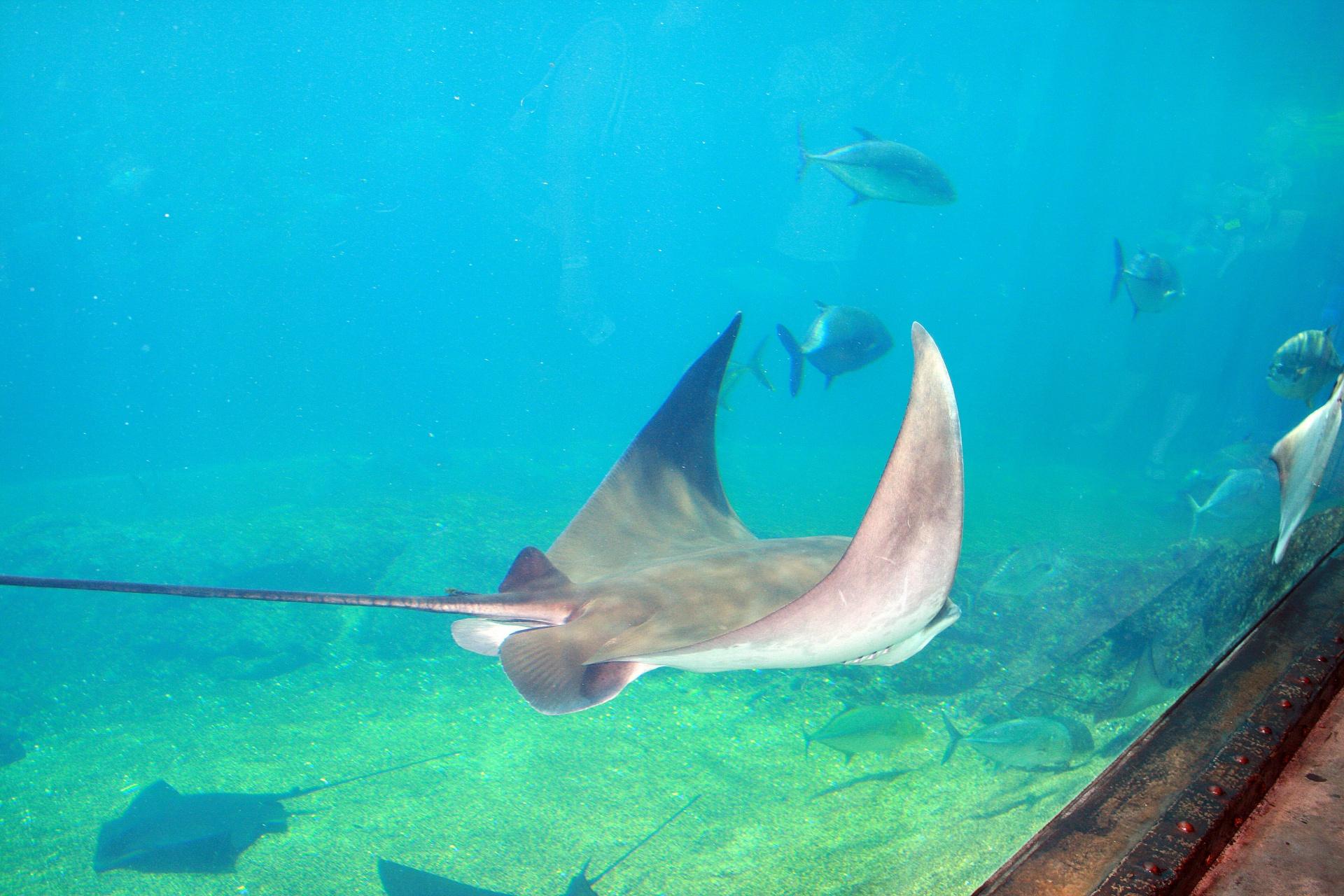 Egy cápa után a mérgesráják is megdöglöttek az új pécsi állatkertben