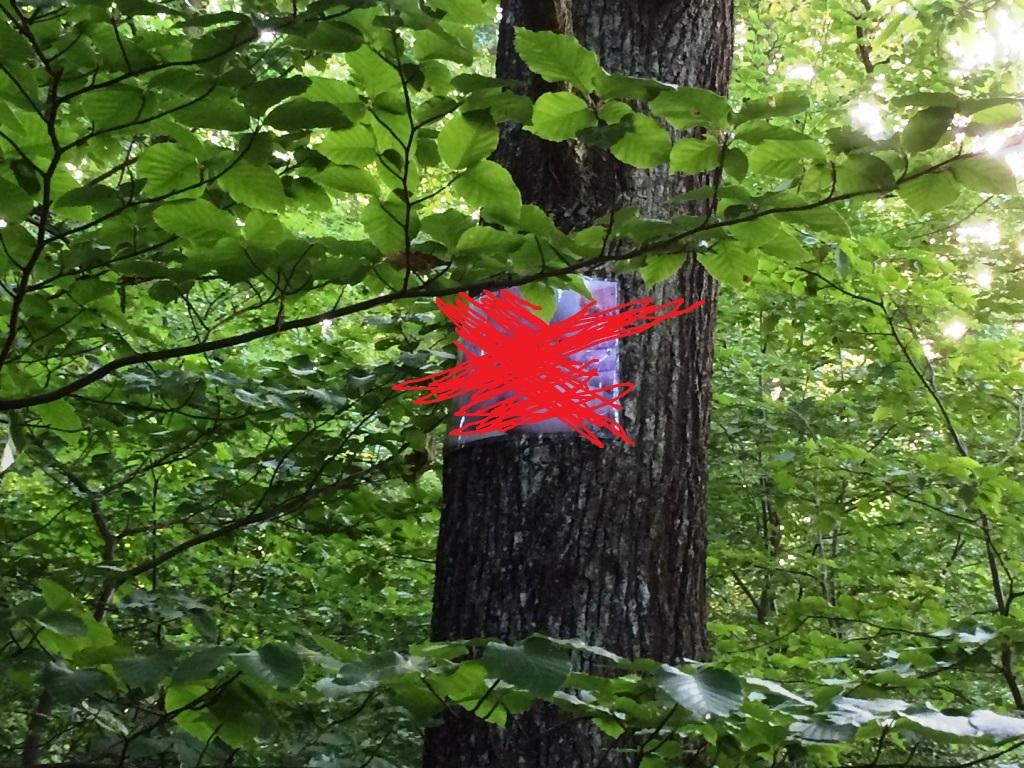 Újra kiszögezték a fákra a kísérteties óriási pinafotókat a Velemér melletti erdőben (18+)