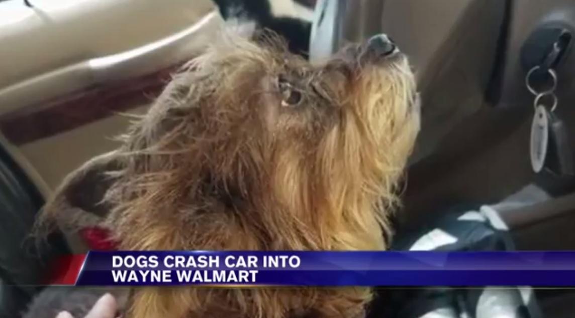 Egy amerikai nő az autóban hagyta a két kutyáját és nem állította le a motort